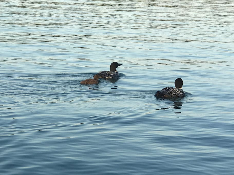 Listen to the loons in the morning and evening as you relax and enjoy your time at the lake.