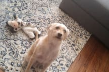 We have a pet dog (25lb terrier)