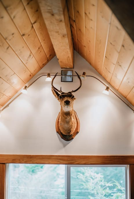 Gordie the one eared Deer- a relic salvaged from the Ucluelet Lodge before it closed