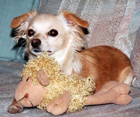 Eureka Haven - Well Behaved Dog Welcomed