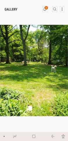 One acre to run. Note that the fence has some holes from the deer jumping. If your dog is a runner, please use a leash. Feel free to roam the yard and relax on the porch.