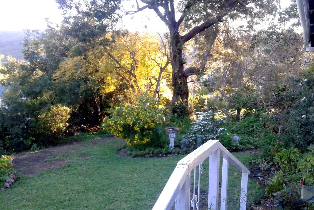 garden from veranda
