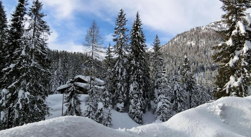300 feets to ski tracks, nice flat - 摩德納迪-坎皮格里奧(Madonna di Campiglio) - 公寓
