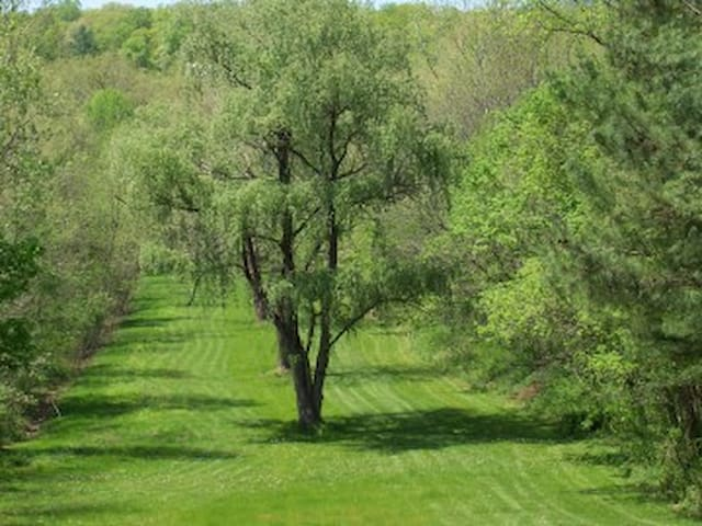 Beautiful yard between the cabin and the river