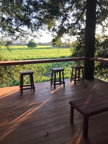 Vineyard guest house, tree house platform, pool
