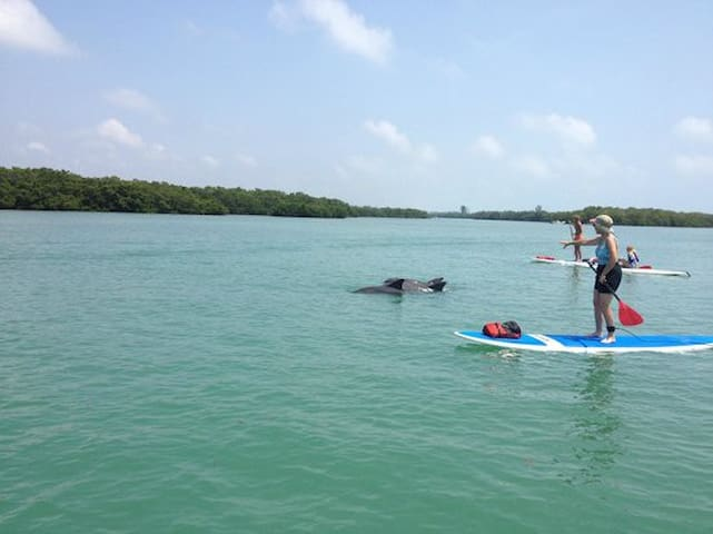 Paddle Boarding in Nearby Sarasota Bay