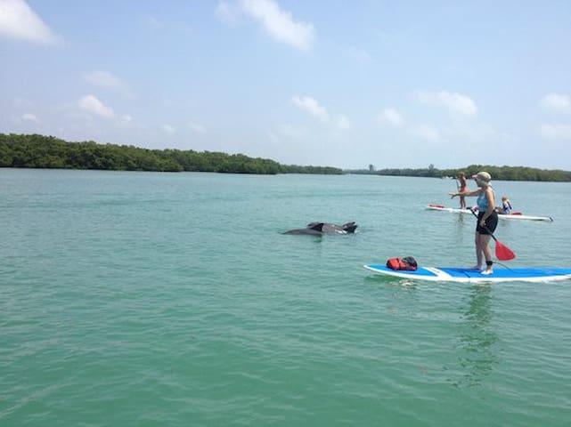 Paddle Boarding in Nearby Sarasota Bay