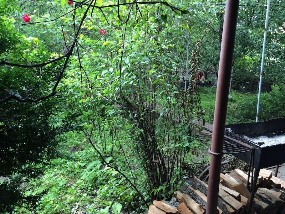 Зеленая часть двора