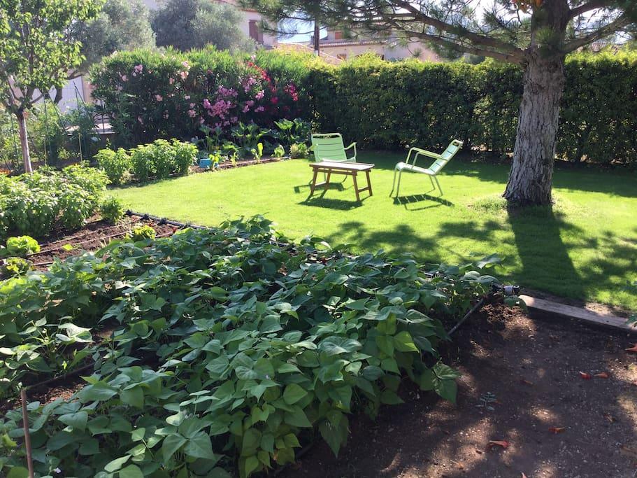 Au milieu du Basilic,tomates et haricots vert!