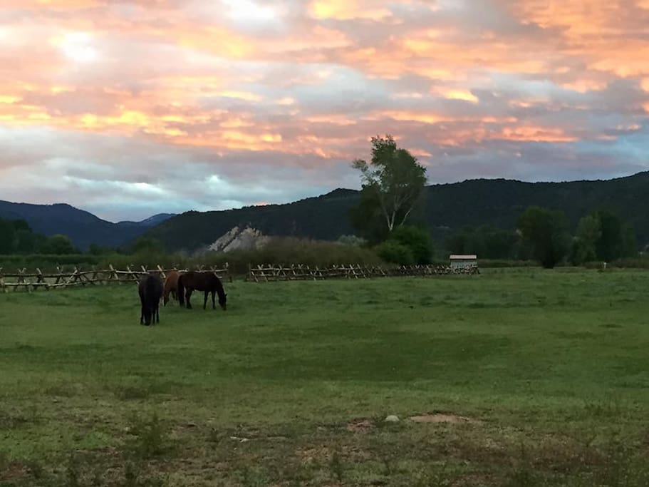 Horses in pasture at sunset