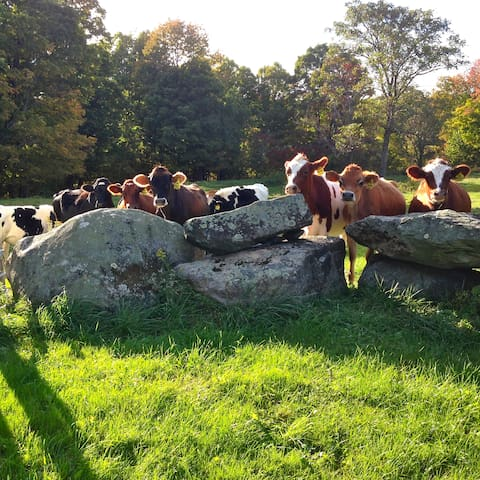 Stone walls surround the yard. Cows pasture the other side.