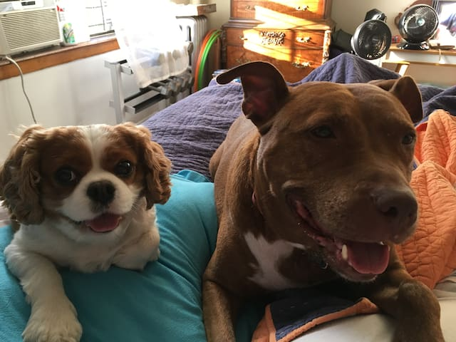 My Tail wagging Greeting Committee!!  Meet Ryker on the left and Raissa on the right!
