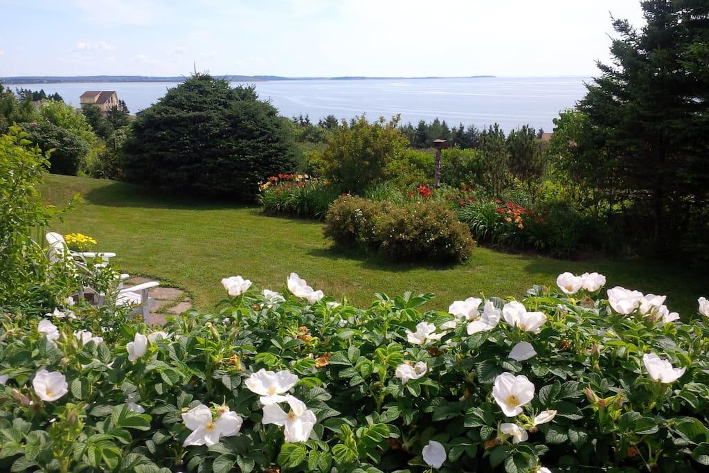 The suite garden with Ocean view