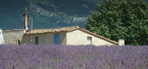 La Blache is een eeuwenoude nederzetting, op een plek waar het asfalt ophoudt. Je ruikt de lavendel, je verliest je in vertes en sterrenhemels. Je hoort de krekels tegen een achtergrond van volkomen stilte. Je ademt zuivere lucht. Je beleeft de magie van puurheid, avontuur en gastvrijheid