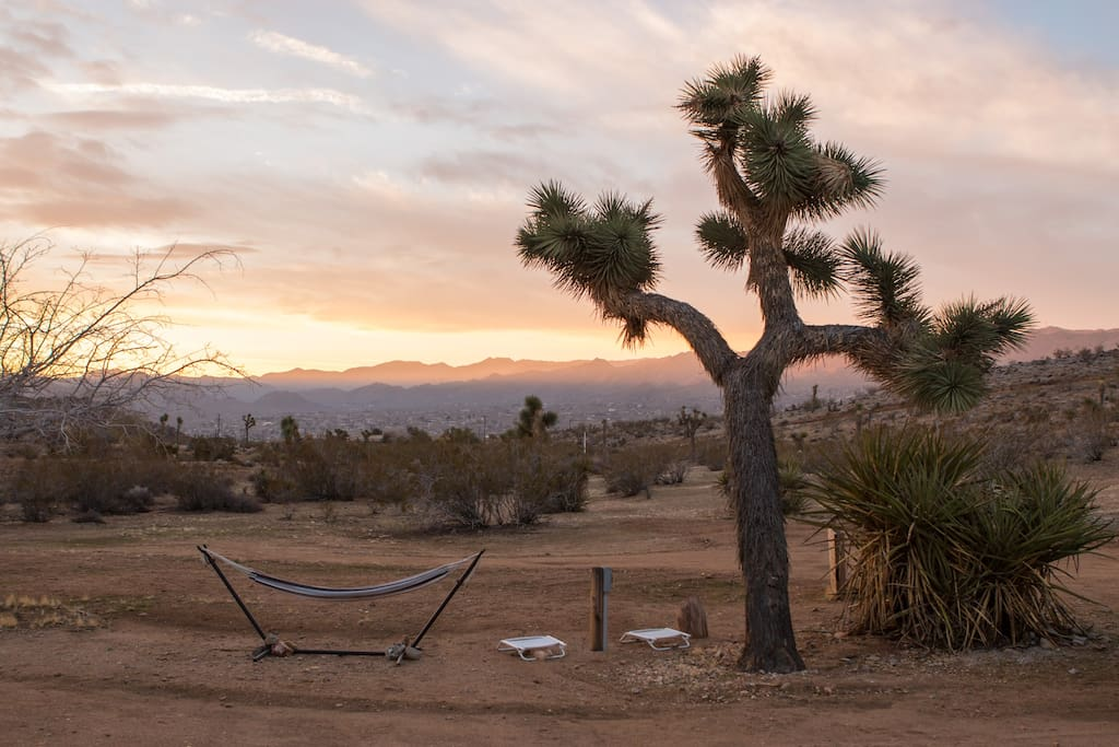 This beautiful Joshua Tree is right outside of the house.