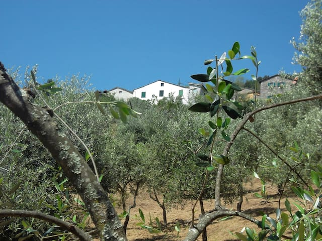 The house from the Olive Groves