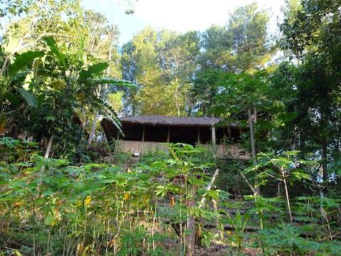 Organic Torajan Homestay
