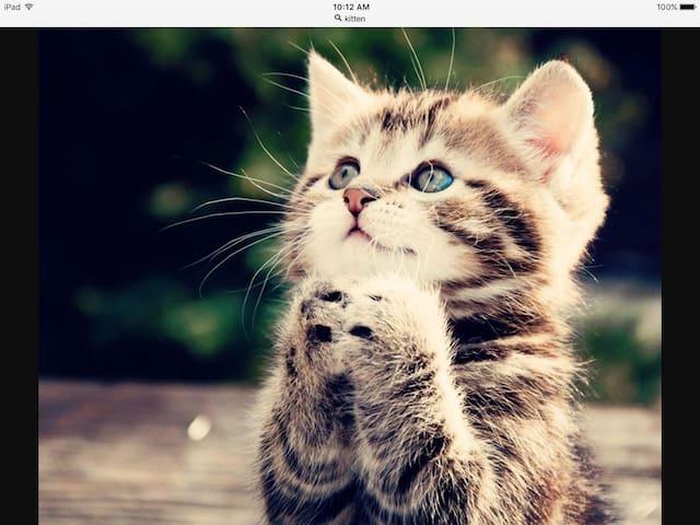 Fake kitty testrrr don't book! - Jordan Valley - Leilighet