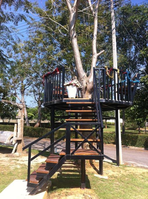 Tree seat with breath taking air and mountain view. มีที่นั่งรับลม บนต้นไม้ บรรยากาศดี