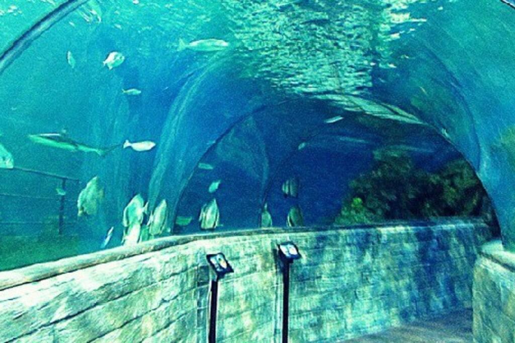 The Malta Aquarium - Qawra