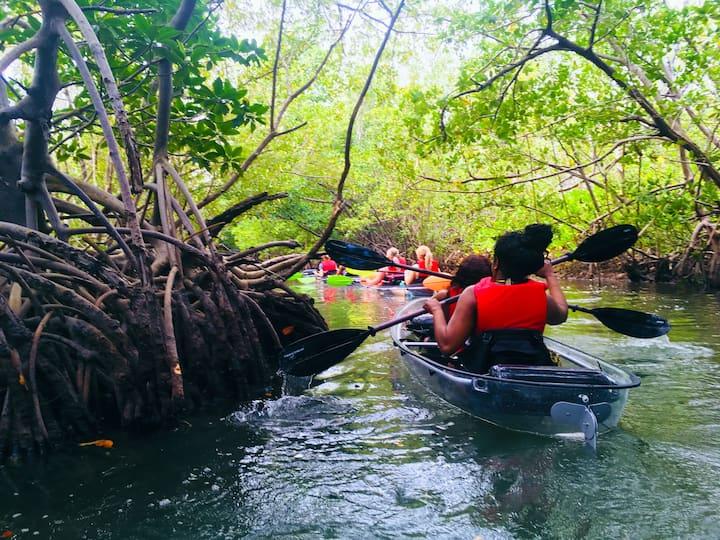 Clear kayaks through mangrove trails