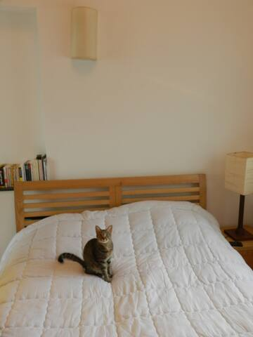 Double bed (comes without the cat)