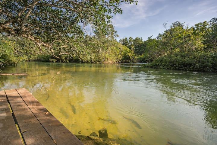 Natureza preservada com as Piraputangas esperando por você. / Nature preserved with the Piraputangas (regional fish) waiting for you.