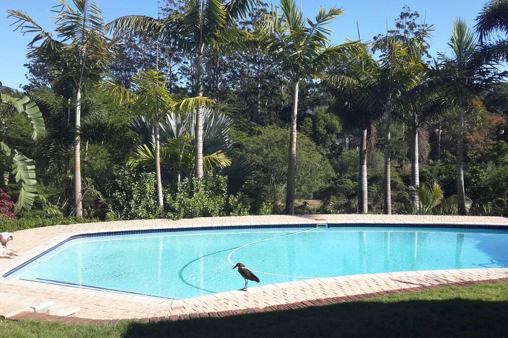 Sparkling huge pool