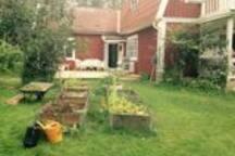 Small herbal/vegetable garden