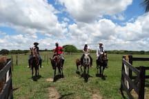 Paseos a caballos
