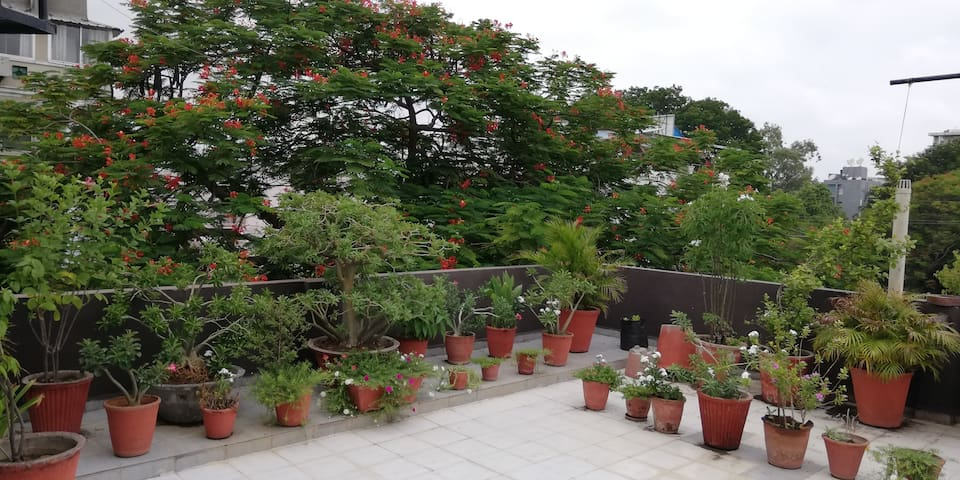 Spacious room, Wifi , n a beautiful terrace garden
