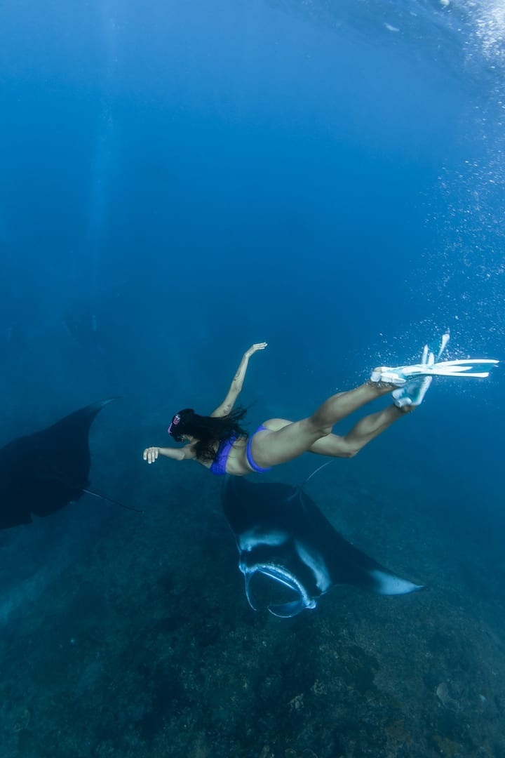 Swim with giant Oceanic Manta Rays