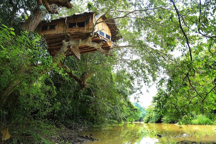 Kumbuk Tree House