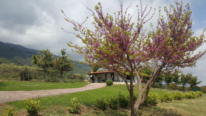 Eco Garden House in Leptokarya, Pieria, Greece
