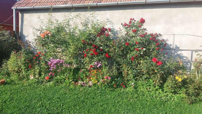 Flower's Garden Virágoskert Vendégház - Gheorgheni - Casa