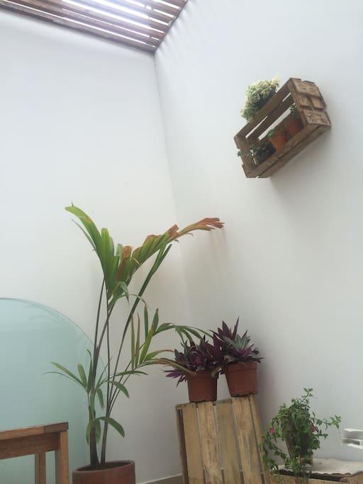 Indoors yard ✨