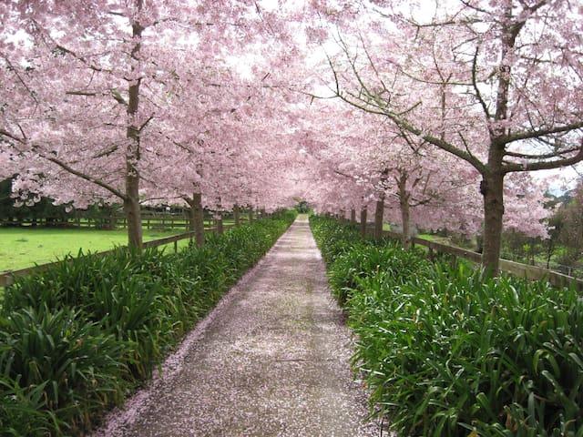 English Cherry Tree Manor, Pendula ( room 2)