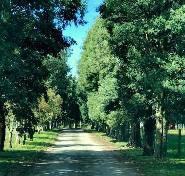 Driveway to you country farm stay