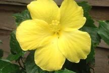 Flower power present at 'Finca Don Mincho'