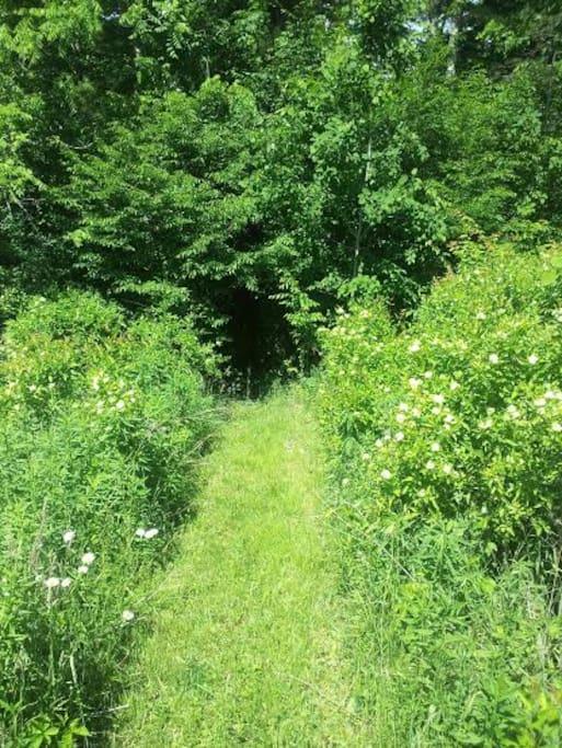 Explore the trails