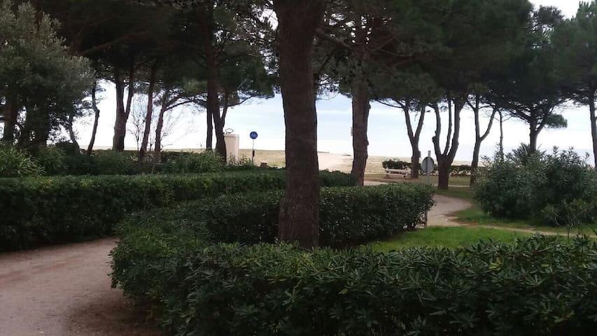 Studio 200m plage en cœur de pinède - Argelès-sur-Mer