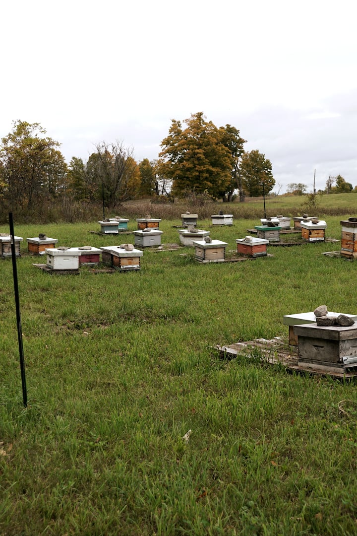 Visit a small town bee yard