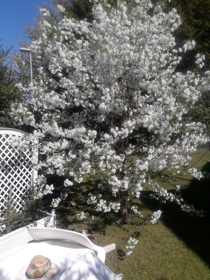 Sonniges ruhiges Zimmer mit Gartensitzecke