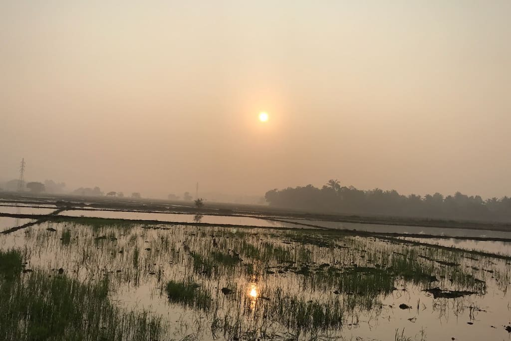 Sonnenaufgang über Reisfelder