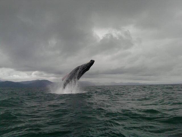Ballenas, una aventura extraordinaria