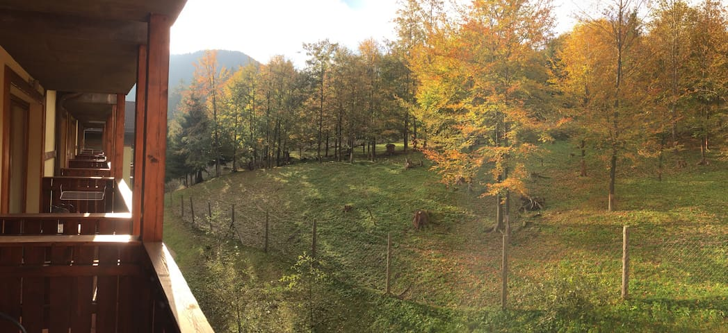 Watch animals from the balcony of our quiet studio - Ružomberok