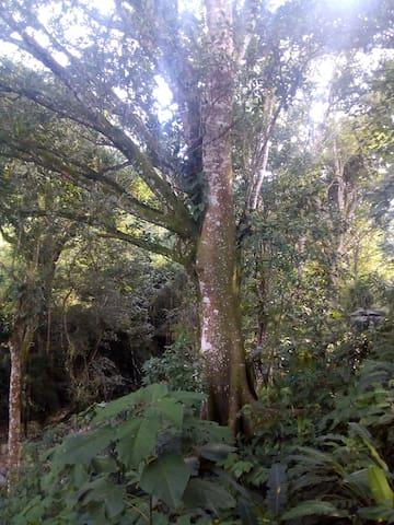 Árbol sagrado