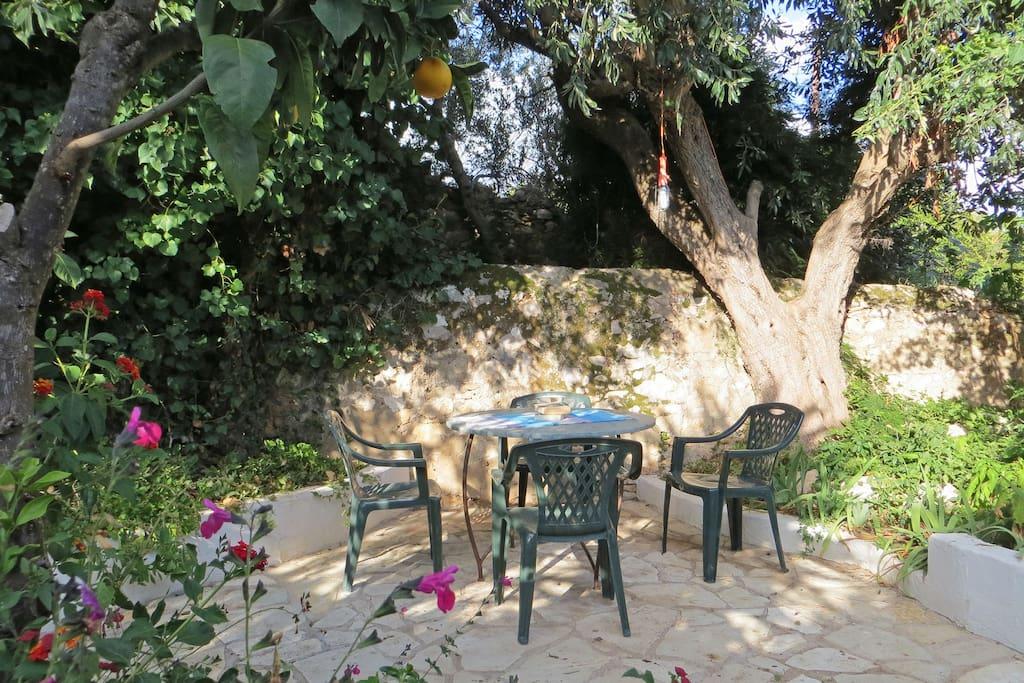 Villa Phobe shady garden