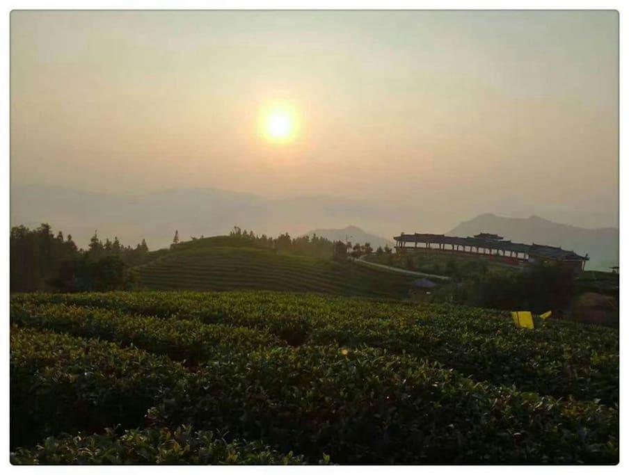 布央茶山旅游区内茶园观日出,观云海,云在自己的脚底下,彷如仙境,美不胜收