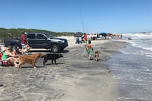 Dog beach on north end of island